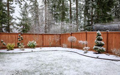 ¿Por qué no debo olvidarme de mi jardín en invierno?