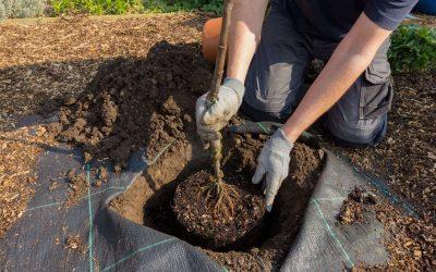 ¿Puedo plantar árboles durante todo el año?