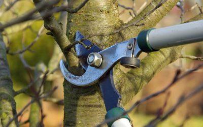 ¿Puedo curar mis árboles de cortes o podas?